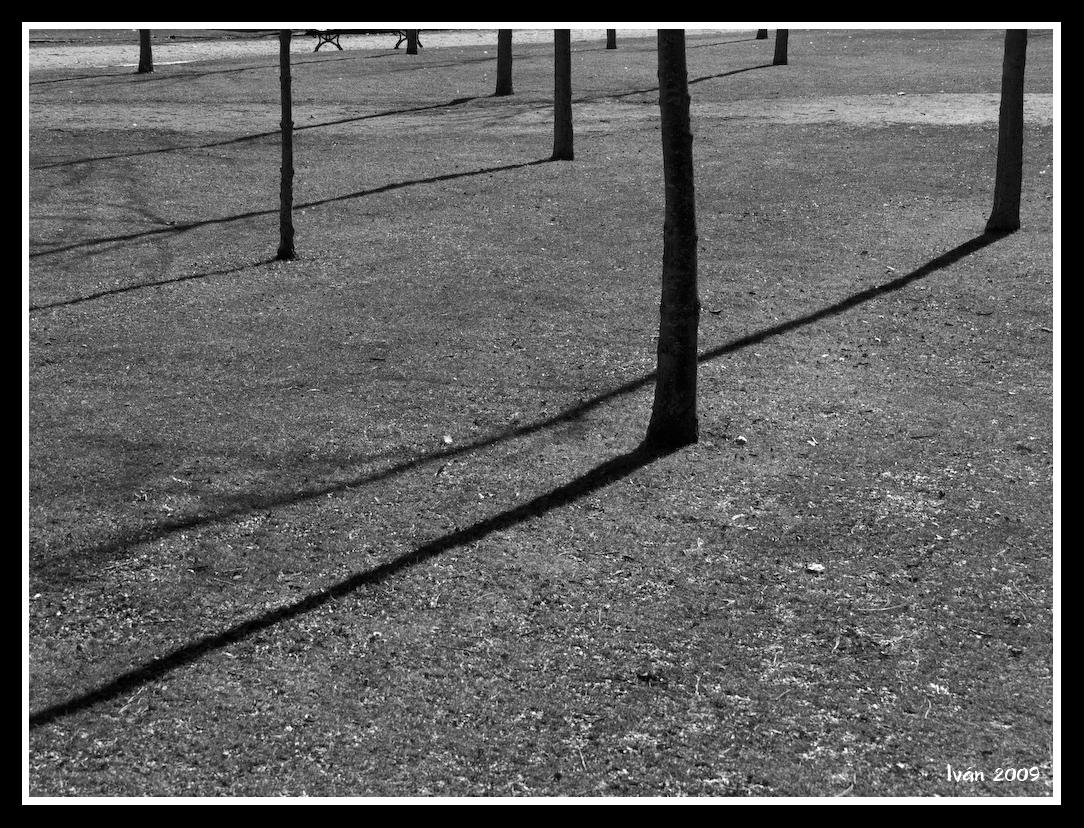 Las sombras de los árboles son alargadas