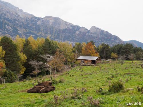 Bisontes en la pradera