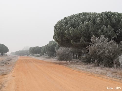 Pinar de Antequera